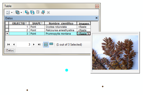 Insert pictures to the attribute table in ArcGIS